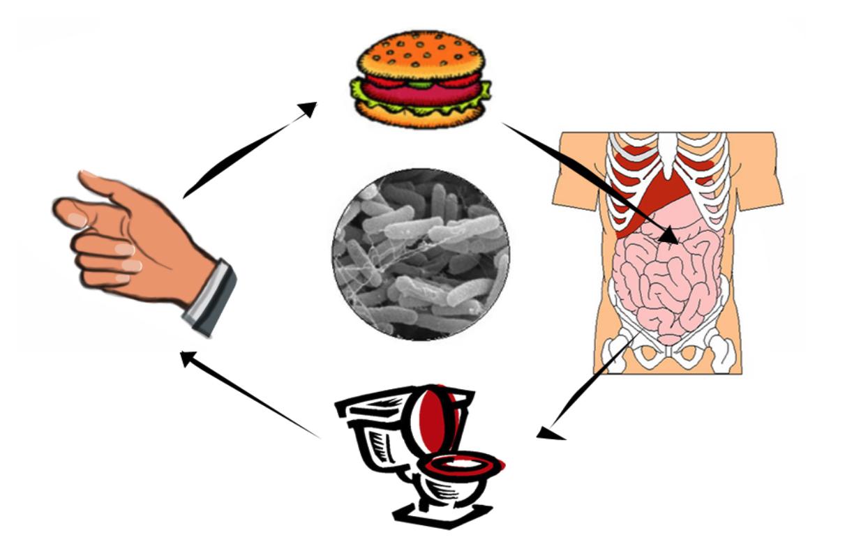 De cirkel van de voedselvergiftiging
